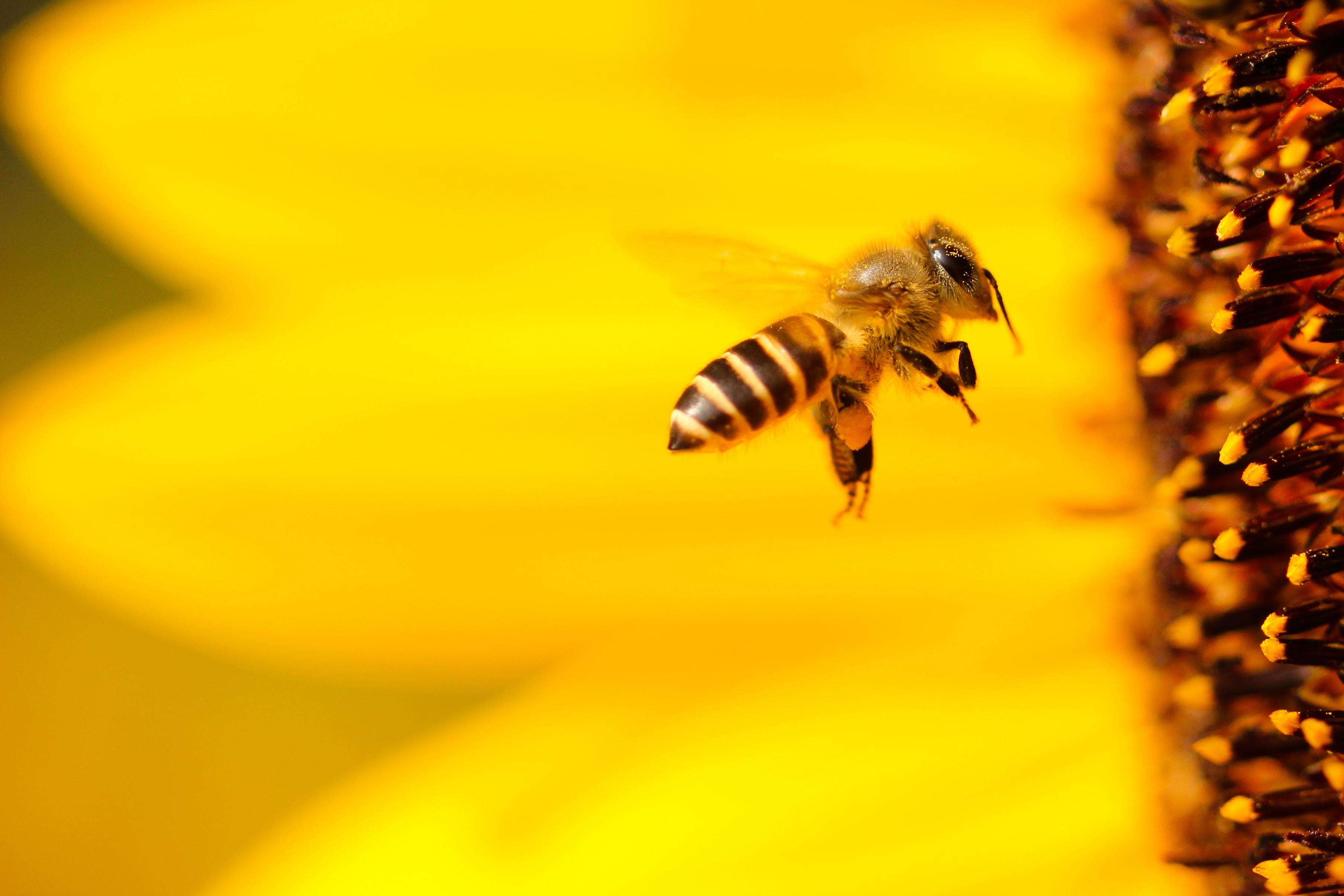 Mérieux NutriSciences_bees.jpg
