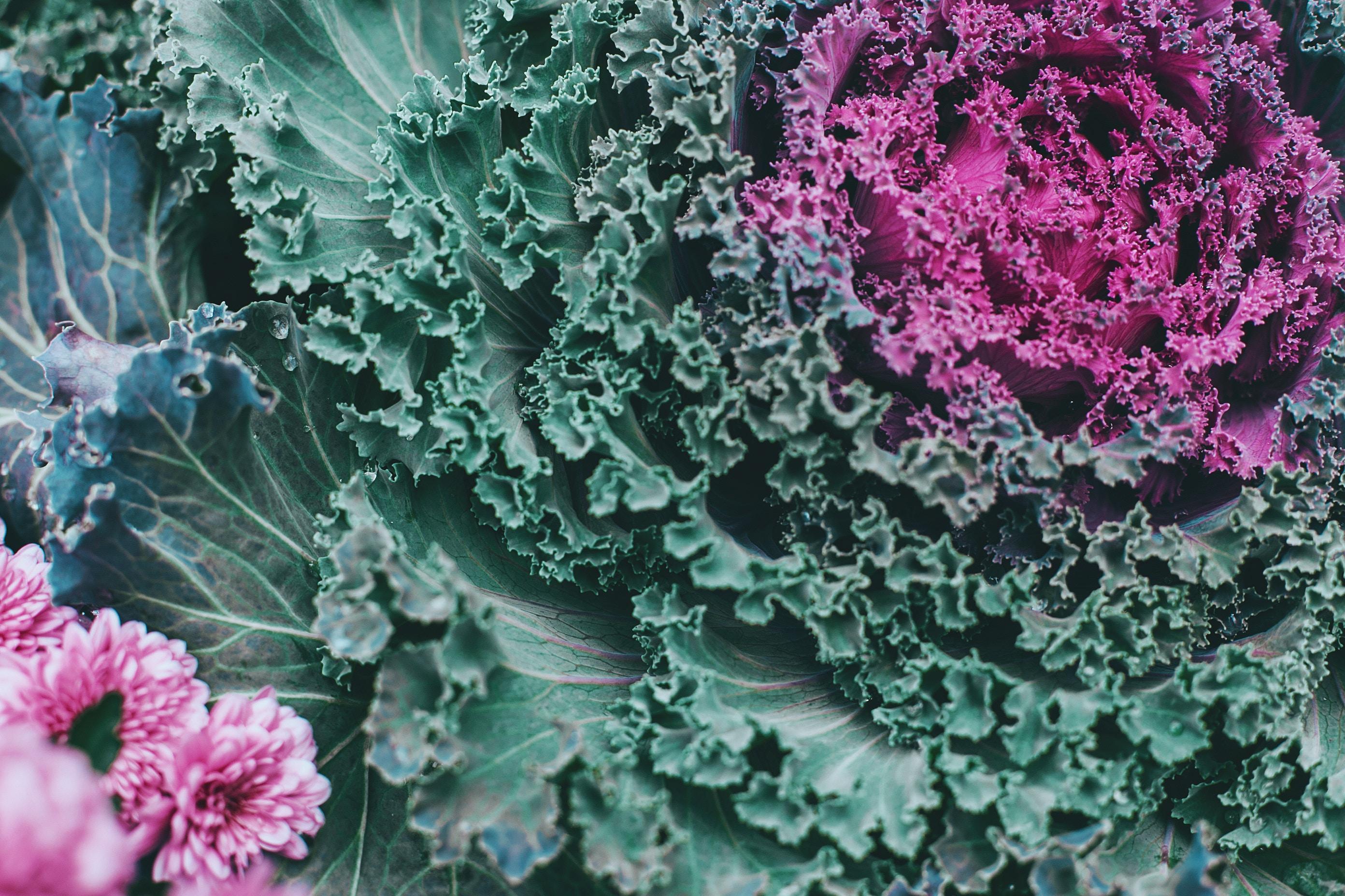 Mérieux NutriSciences_OGM