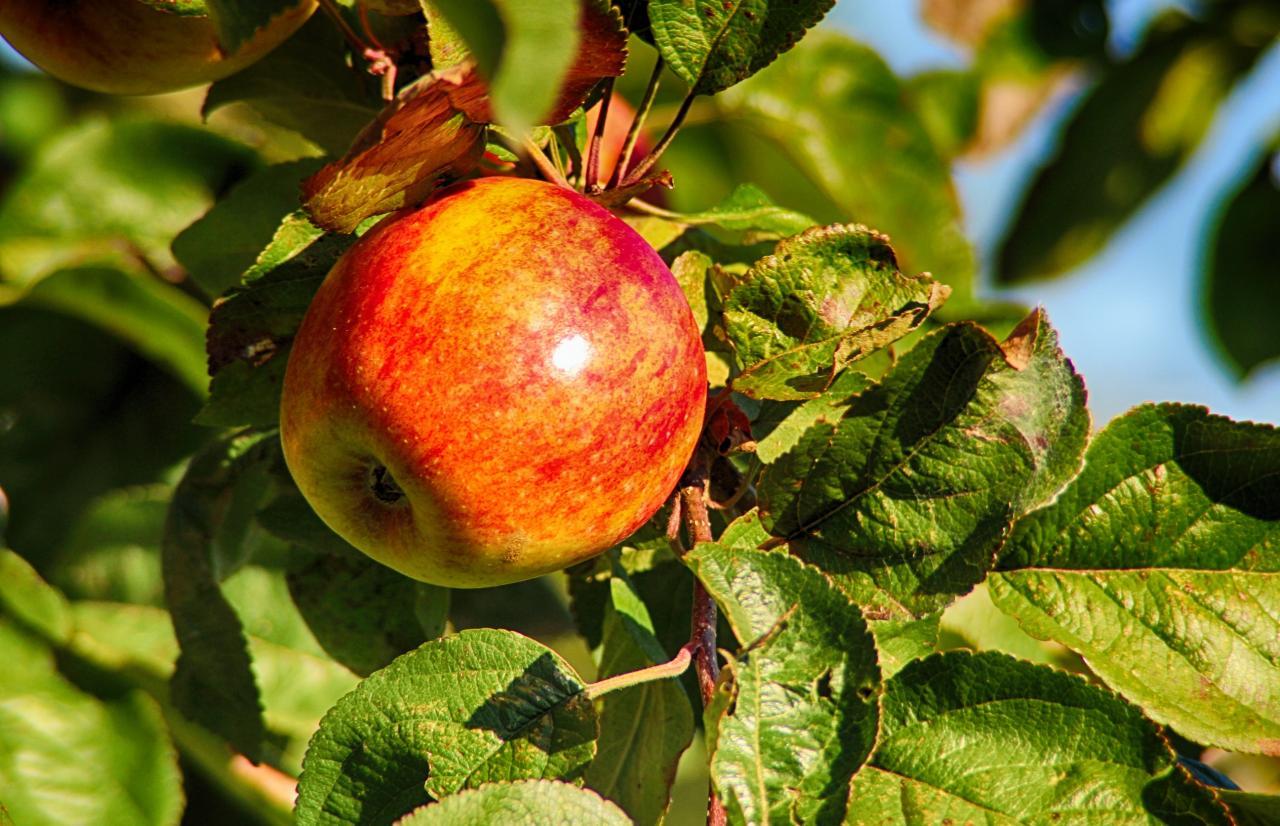 Merieux NutriSciences_Apples