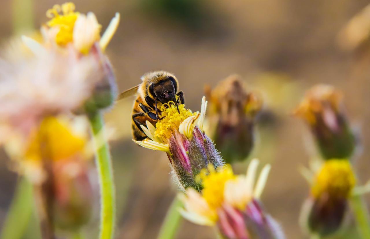 Mérieux NutriSciences_Bee