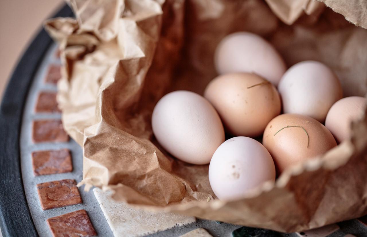 Mérieux Nutrisciences_Free Range Egg
