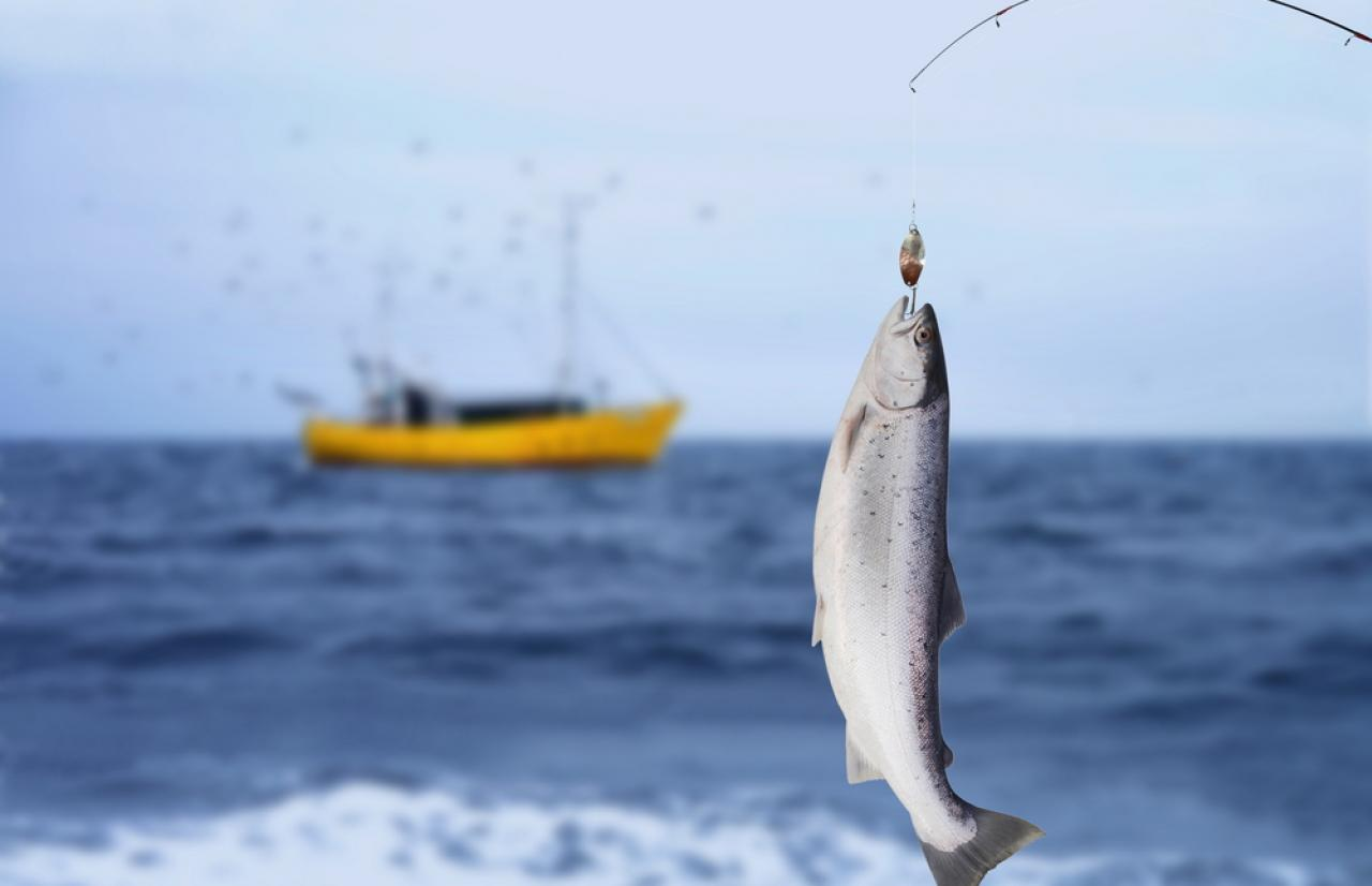Mérieux NutriSciences_Fishing