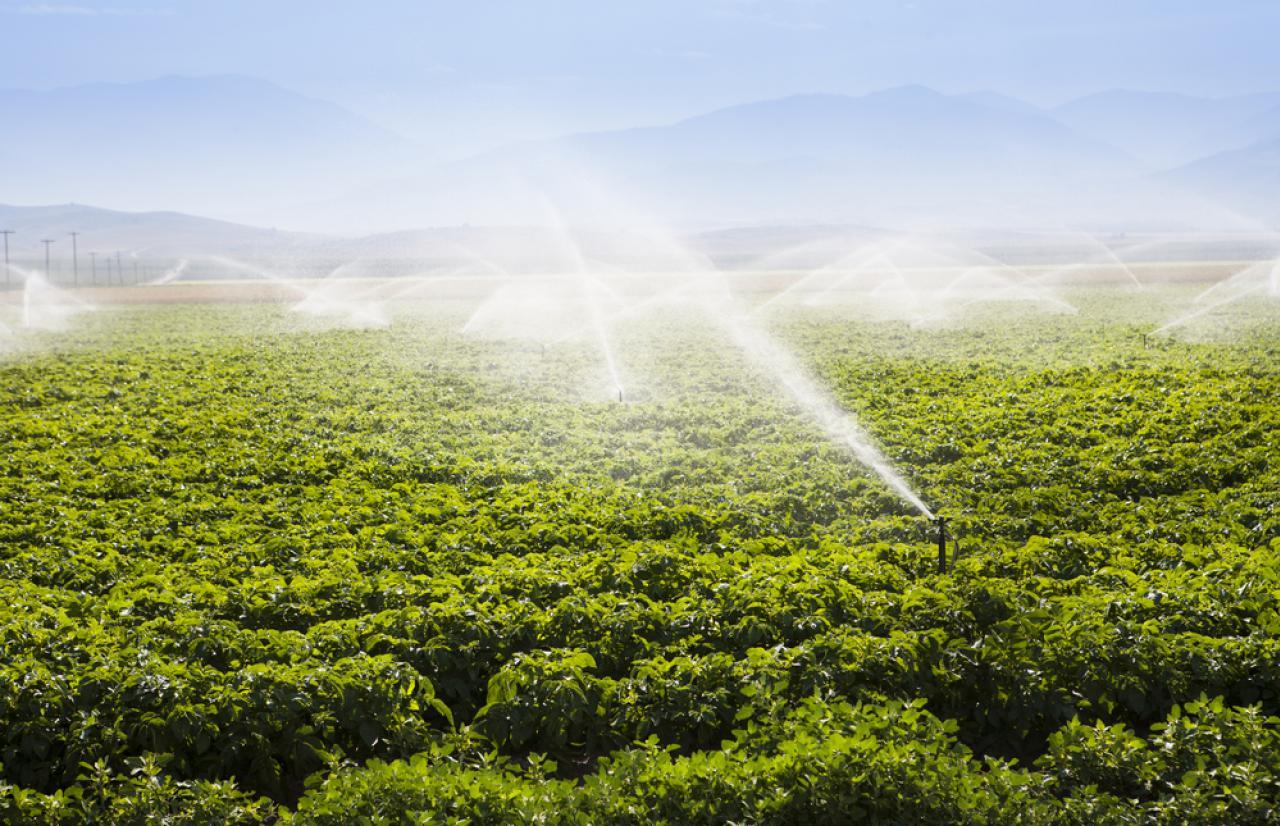 Mérieux NutriSciences_irrigation