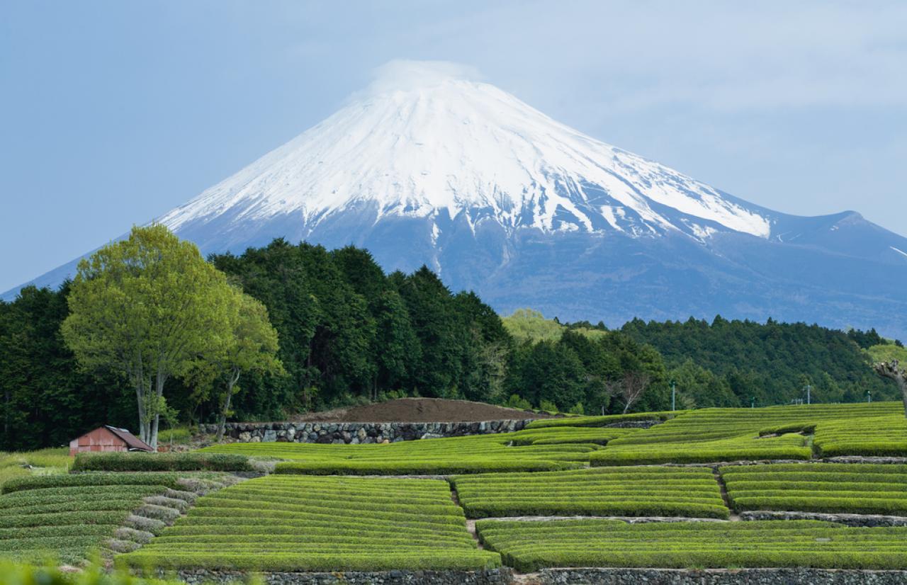 Mérieux NutriSciences_Japan