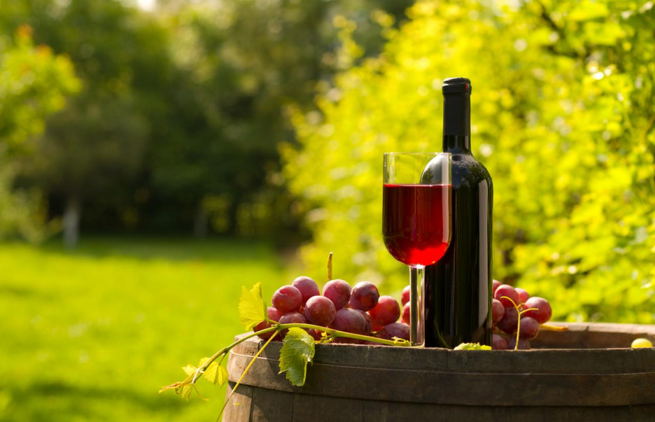 Mérieux NutriSciences Wine Italy