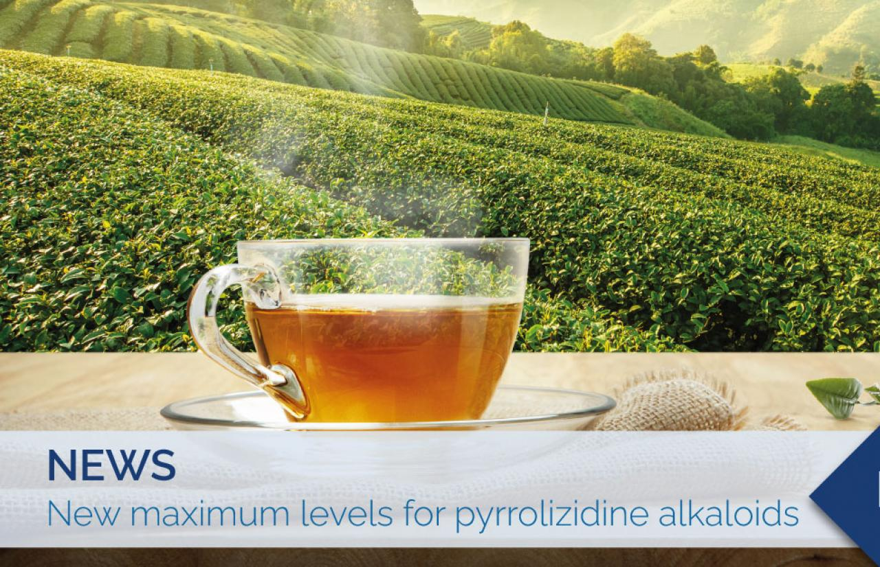 maximum levels of pyrrolizidine alkaloids