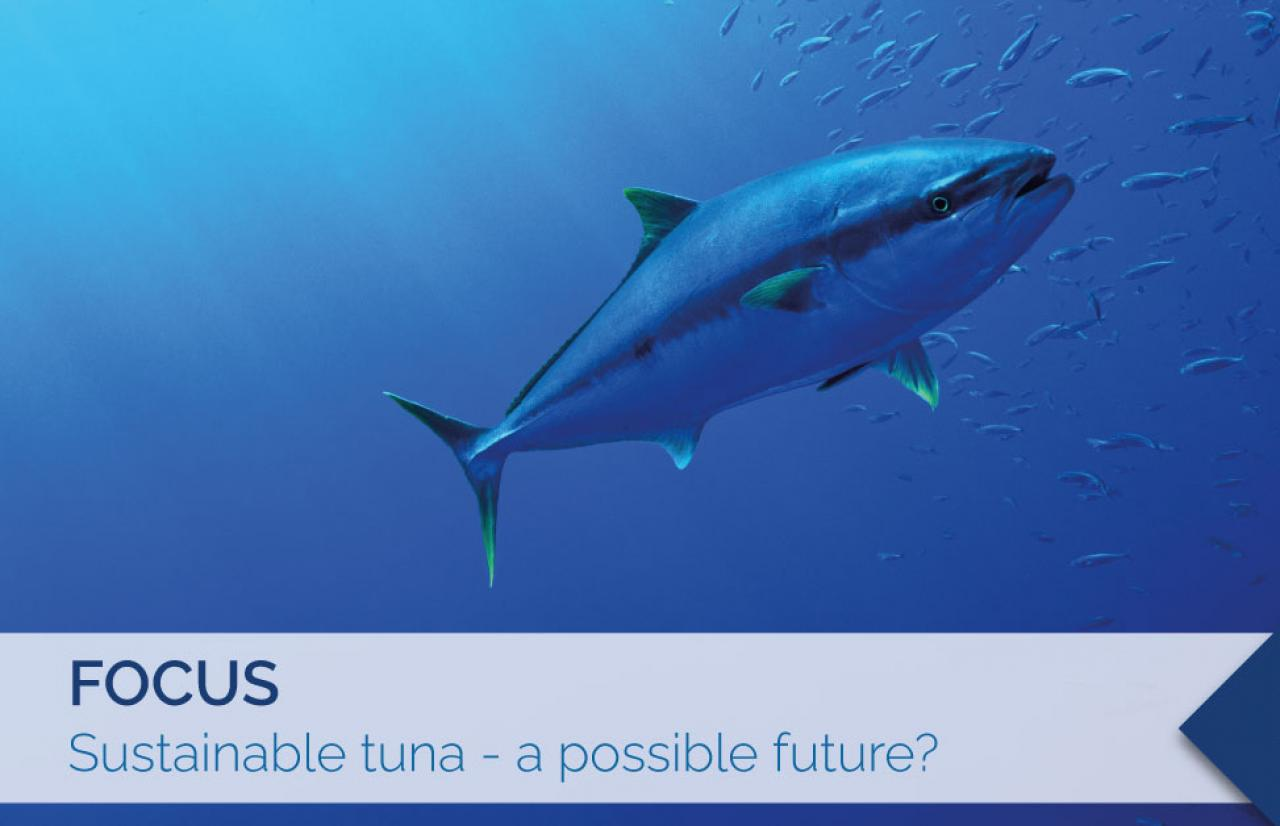 sustainable tuna, sustainable fishing