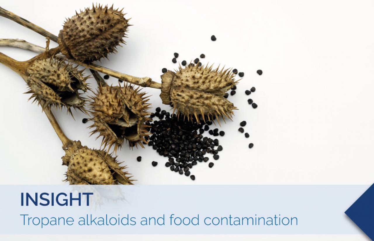 tropane alkaloids contamination