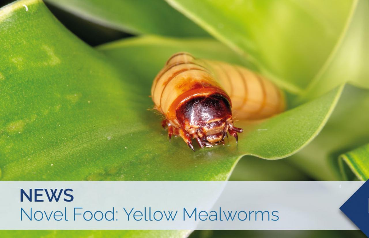 novel food yellow mealwom
